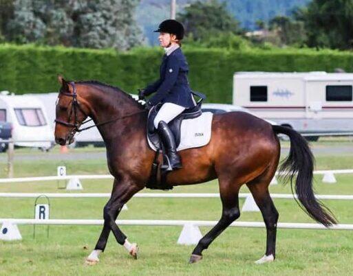 Horse Establishments